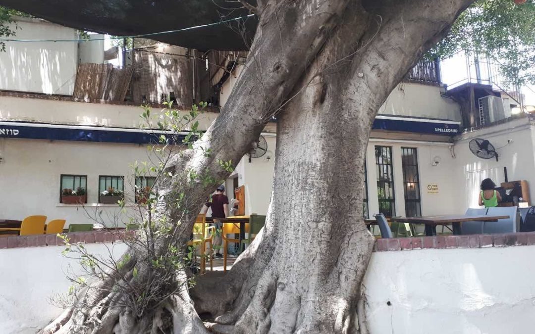 neve zedek tree